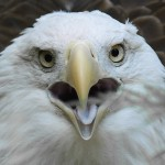 The Rule Of Thirds for Bird Photography