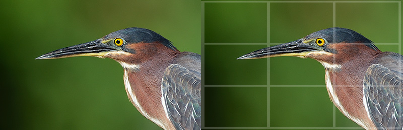 Digital Photography Composition: Green Heron's eye on the top third of the rule of thirds grid