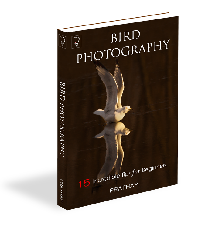 Bird Photography: 15 Incredible Tips for Beginners. Beginners guide to bird photography. Bird Photography Tips. eBook by Prathap.