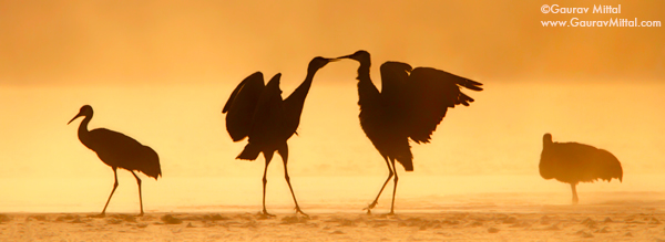 Gaurav Mittal Interview. Young and Talented Bird Photographer from India. Kissed in the Mist.
