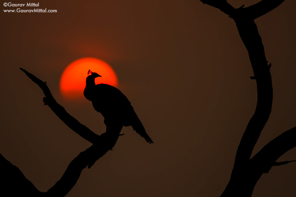 Gaurav Mittal Interview. Young and Talented Bird Photographer from India. The Rising