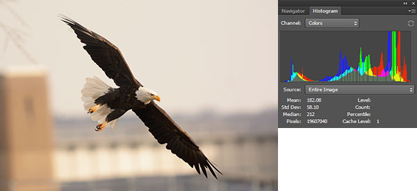 Nature Photography Simplified. Optimum Exposure For Normal Scene. A Bald Eagle flies across the Lock & Dam 14 in Iowa