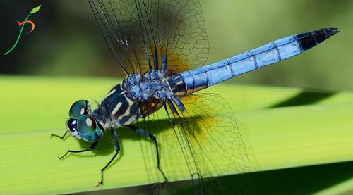 Nature Photography Simplified. Understanding Exposure. Shallow Depth of Field, DOF.