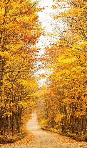Nature Photography Simplified By Prathap. Horizontal And Vertical Composition Techniques. Fall Foliage On The Way To Agate Waterfalls In Upper Peninsula, Upper Michigan