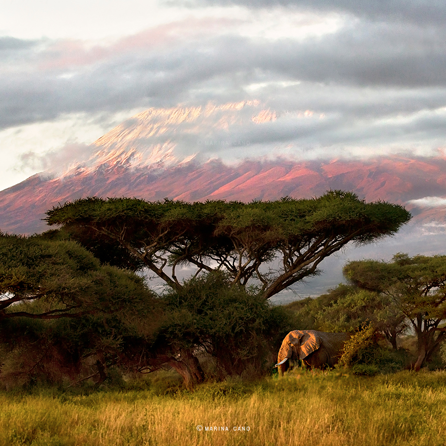 National  Geographic Cover Page Photo taken in Amboseli National Park in Kenya. Interview with Award winning wildlife photographer Marina Cano. Cabarceno Natural Park in Cantabria Spain. wildlife photographer from Cantabria in the North of Spain. Interview by Prathap. Nature Photography Simplified.
