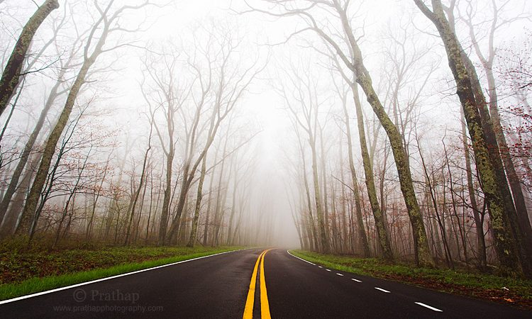Best Nature Photos.Foggy Morning Scene In Skyline Drive Blue Ridge Parkway Motor Driveway In Shenandoah National Park, West Virginia, US. Nature, Wildlife, Bird, And Landscape Photography By Prathap.