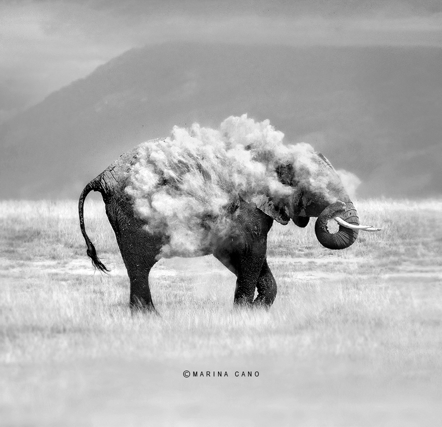 Dusting Elephant Photo taken in Amboseli National Park in Kenya. Interview with Award winning wildlife photographer Marina Cano. Cabarceno Natural Park in Cantabria Spain. wildlife photographer from Cantabria in the North of Spain. Interview by Prathap. Nature Photography Simplified.National  Geographic Cover Page Photo taken in Amboseli National Park in Kenya. Interview with Award winning wildlife photographer Marina Cano. Cabarceno Natural Park in Cantabria Spain. wildlife photographer from Cantabria in the North of Spain. Interview by Prathap. Nature Photography Simplified.National  Geographic Cover Page Photo taken in Amboseli National Park in Kenya. Interview with Award winning wildlife photographer Marina Cano. Cabarceno Natural Park in Cantabria Spain. wildlife photographer from Cantabria in the North of Spain. Interview by Prathap. Nature Photography Simplified.