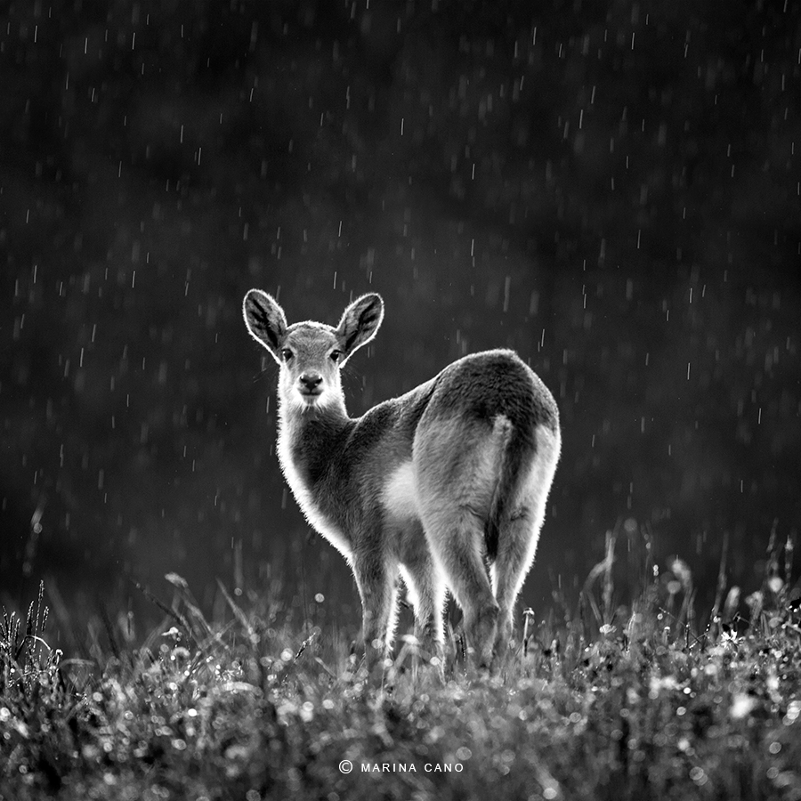 Cabarceno Wildlife Nature Park  Cantabria Spain. Interview with Award winning wildlife photographer Marina Cano. Cabarceno Natural Park in Cantabria Spain. wildlife photographer from Cantabria in the North of Spain. Interview by Prathap. Nature Photography Simplified.