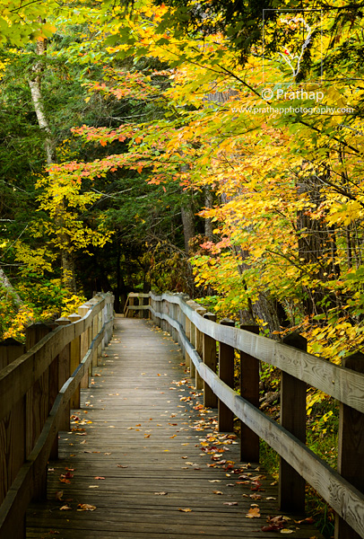 Best Nature Photos. Peak Autumn Colors Fall Foliage in Porcupine Mountains Wilderness Park, Upper Peninsula, Michigan, USA . Migratory Birds. National Bird and Animal of America. Nature, Wildlife, Bird, and Landscape Photography by Prathap.