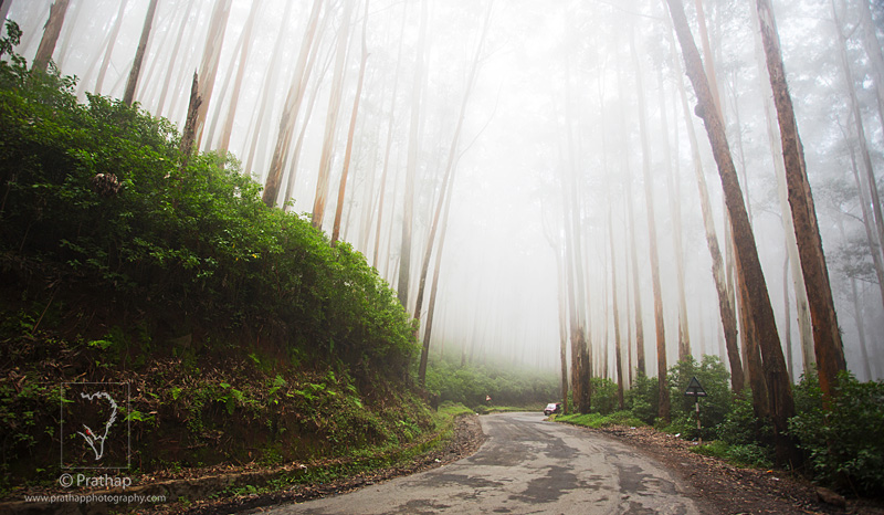 Best Nature Photos.Foggy morning road in Ooty. Nature, Wildlife, Bird, and Landscape Photography by Prathap.