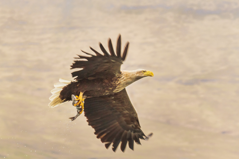 Free Bird Photography Contest. Free Bird Photography Competition. Best Bird Photography Competition. July and August 2015. Nature Photography Simplified.