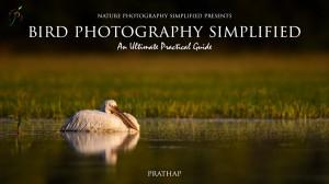 Bird Photography Simplified eBook. An Ultimate Practical Guide to Bird Photography.