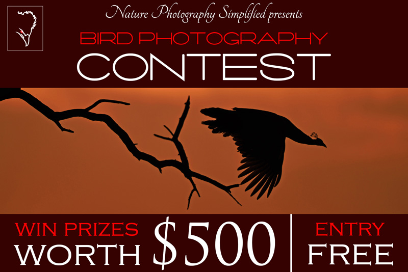 Bird Photography Contest 2015 by Nature Photography Simplified