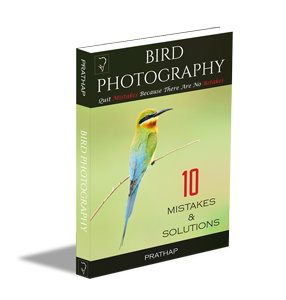 Free Bird Photography eBook for beginners. Best bird photography book for beginners. Bird Photography Tips. Book by Prathap