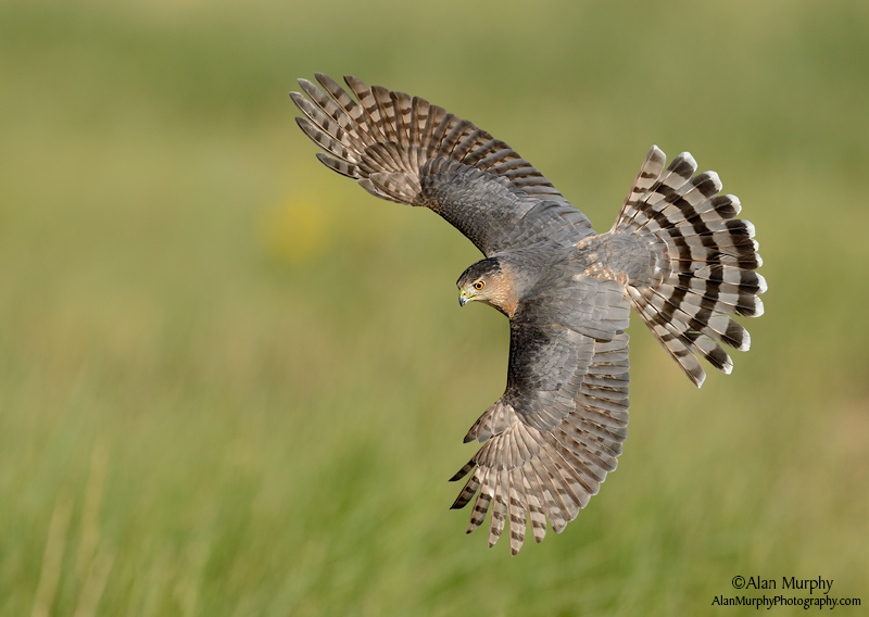 Alan Murphy. Top 12 Bird Photographers in the world. Best Bird Photographers in the world. Nature Photography Simplified.