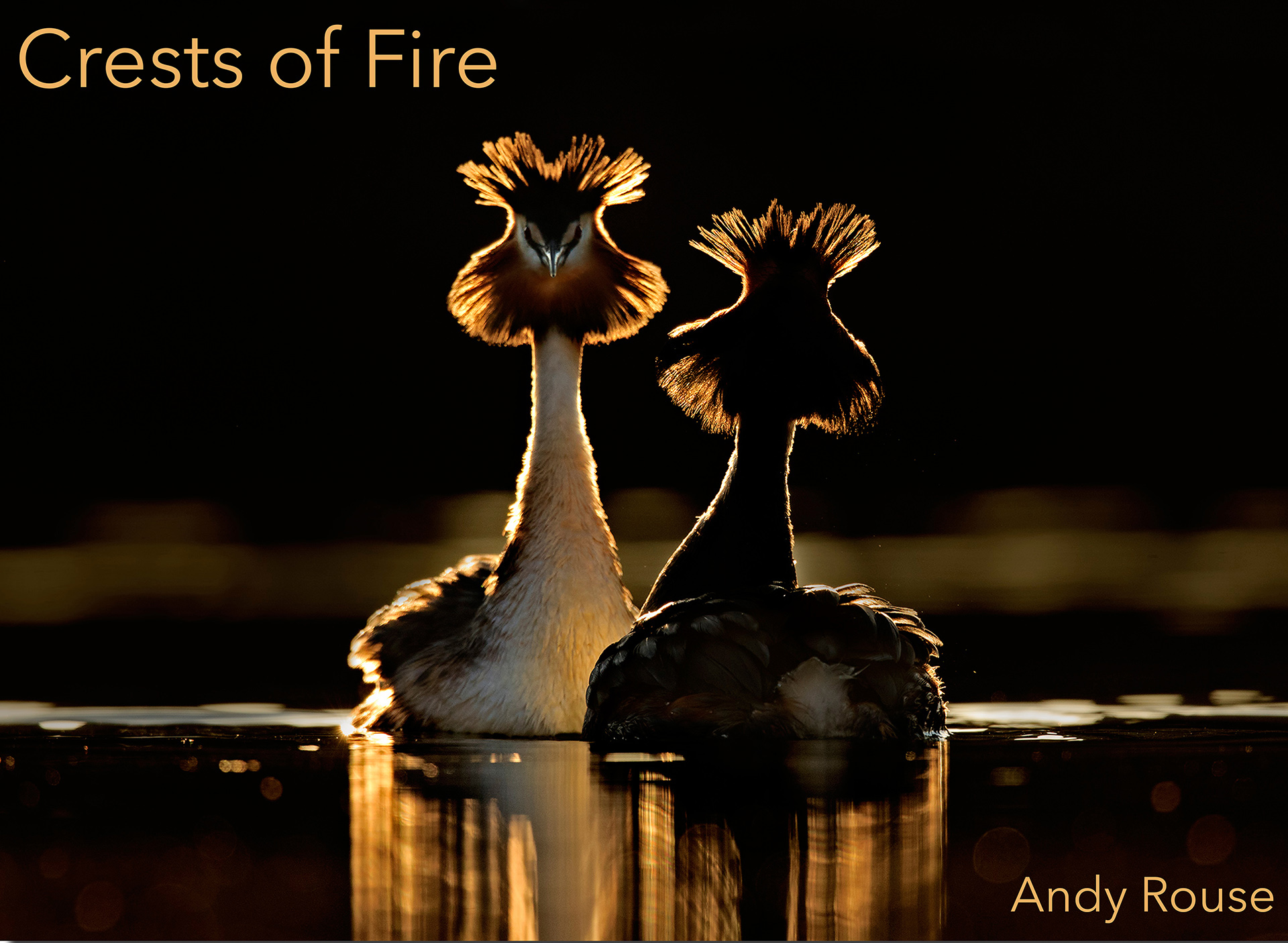 Andy Rouse. Top 12 Bird Photographers in the world. Best Bird Photographers in the world. Nature Photography Simplified.