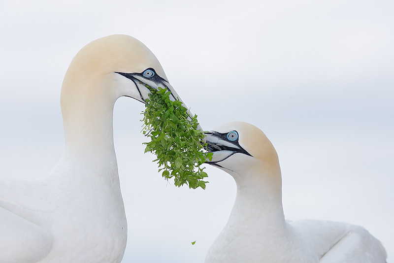 Arthur Morris. Top 12 Bird Photographers in the world. Best Bird Photographers in the world. Nature Photography Simplified.