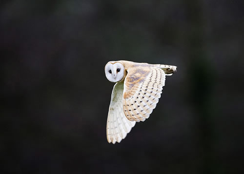 David Tipling. Top 12 Bird Photographers in the world. Best Bird Photographers in the world. Nature Photography Simplified.