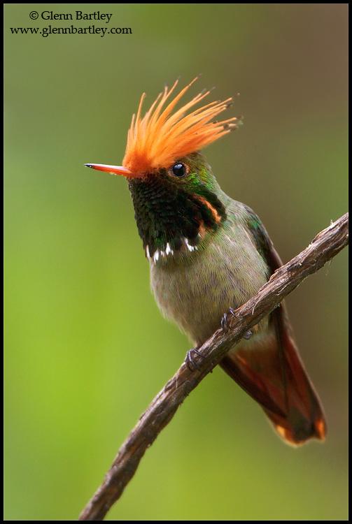 Glenn Bartley. Top 12 Bird Photographers in the world. Best Bird Photographers in the world. Nature Photography Simplified.