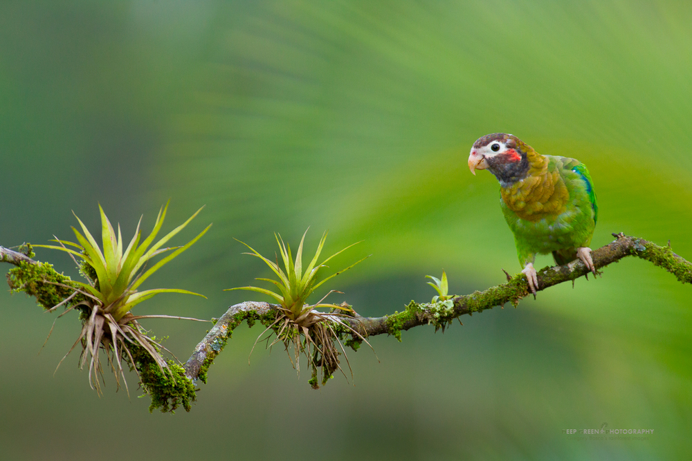 Gregory Basco. Top 12 Bird Photographers in the world. Best Bird Photographers in the world. Nature Photography Simplified.
