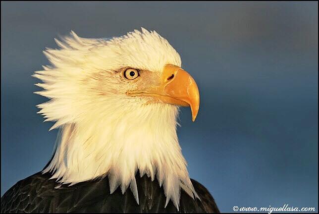 Miguel Lasa. Top 12 Bird Photographers in the world. Best Bird Photographers in the world. Nature Photography Simplified.