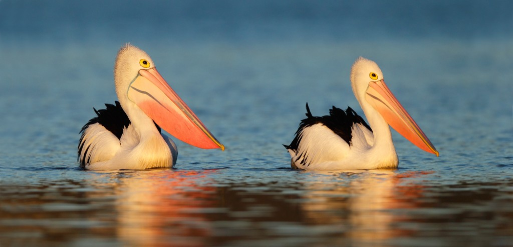 Ofer Levy. Top 12 Bird Photographers in the world. Best Bird Photographers in the world. Nature Photography Simplified.