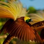Top 12 Bird Photographers in the World