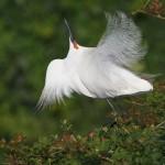 Interview with Michael Milicia: An Inspiring Bird Photographer
