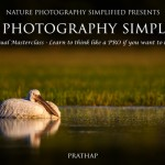 20 Finalist Images Of Bird Photography Contest 2015