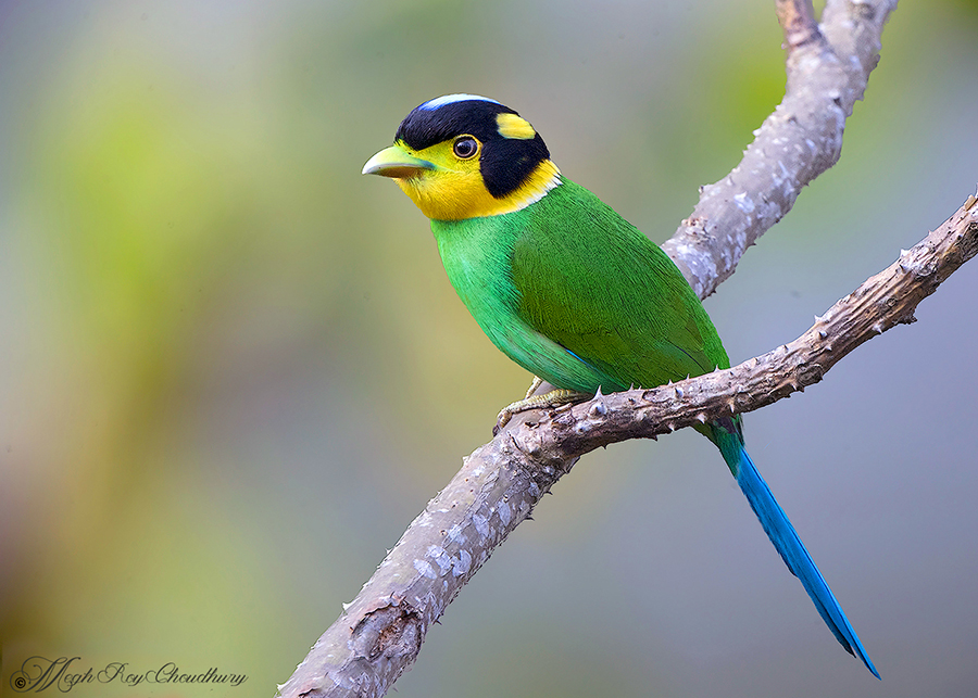 Interview with Megh Roy Choudhury. An Amazing Bird Wildlife Nature Photographer from Calcutta or Kolkata, India. Best Bird Wildlife Nature Photography Tips.