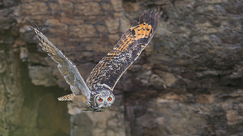 Eagle Owl. Interview with Megh Roy Choudhury. An Amazing Bird Wildlife Nature Photographer from Calcutta or Kolkata, India. Best Bird Wildlife Nature Photography Tips.
