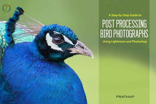 A-Step-by-Step-Guide-to-Post-Processing-using-Adobe-Lightroom-And-Photoshop-600px