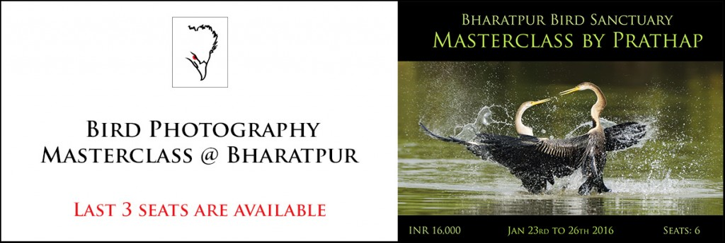 Bharatpur Bird Photography Masterclass Photography Workshop at Bharatpur Bird Sanctuary. India's best bird sanctuary.