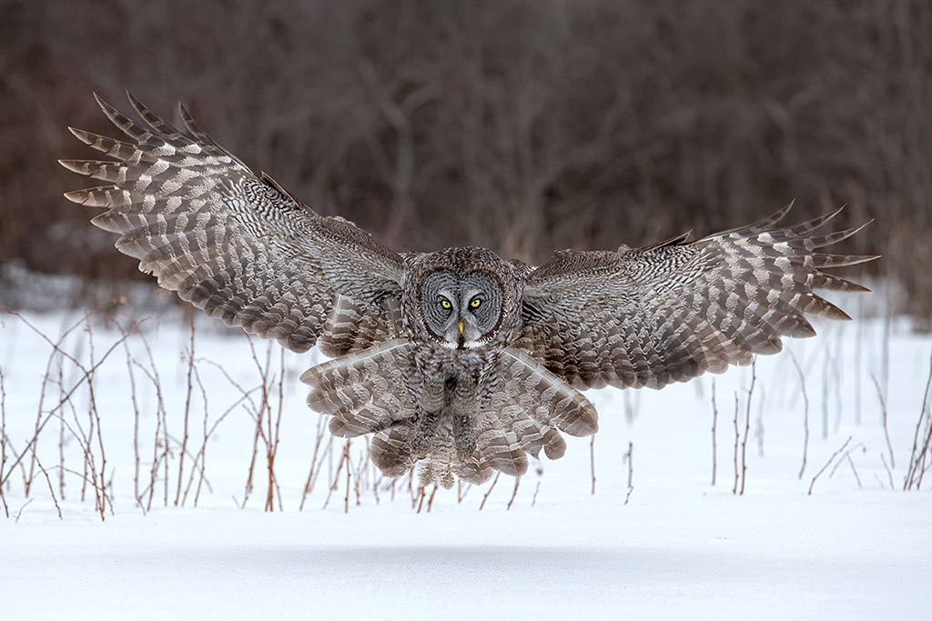 Bird Photography Contest 2015 Winners. Nature Photography Simplified.
