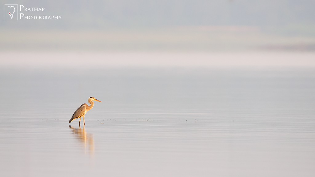 Amazing best bird photographs from 2015. Nature wildlife and bird photography by Prathap.