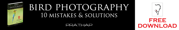 FREE Best Bird Photography book or eBook. Best bird photography tips by Prathap.