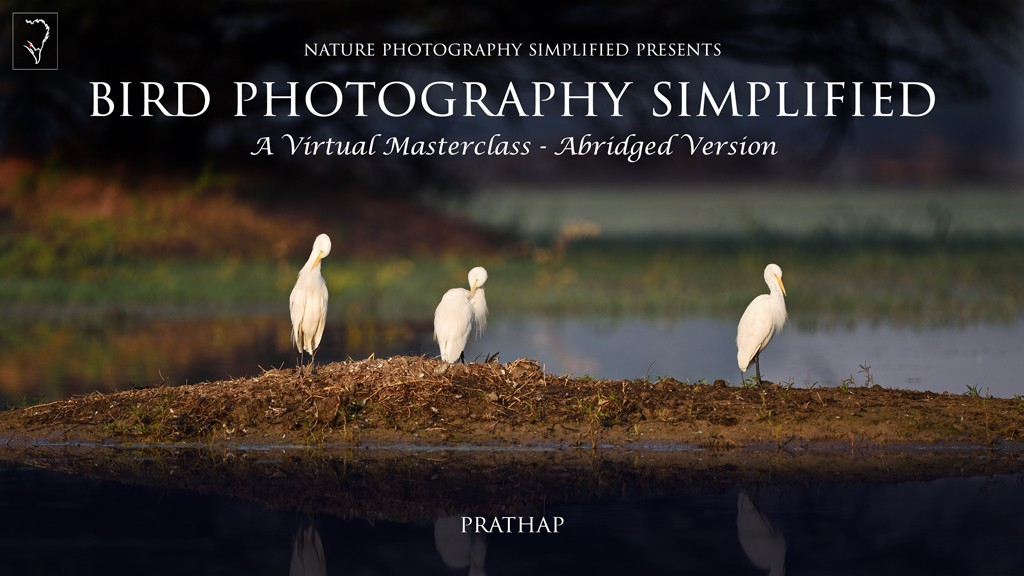 Best Bird Photography book or eBook. Professional bird photography tips. Practical bird photography tips.