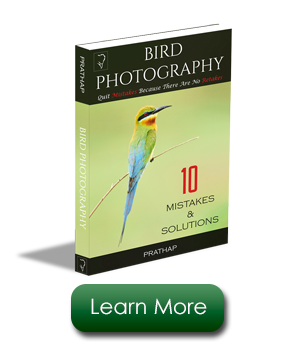 Best Free Bird Photography eBook. Professional Bird Photography Tips.
