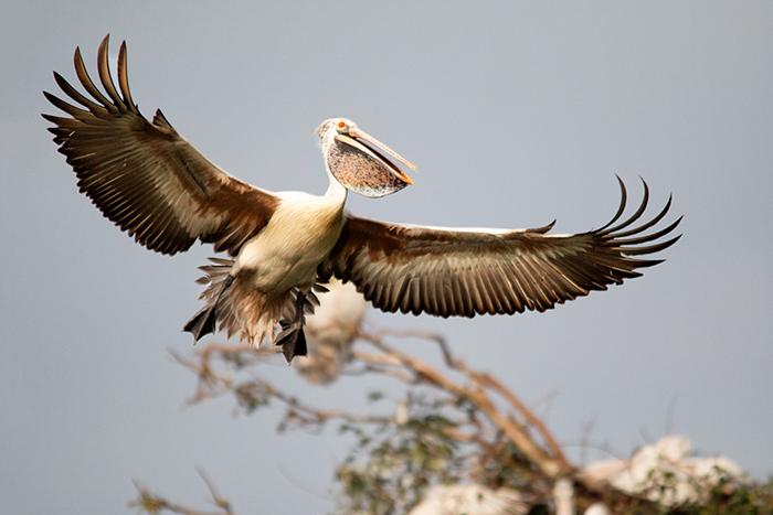 Bird Photography Workshop. Ranganathittu bird sanctuary photography workshop by Prathap. Professional Bird Photography Tips.