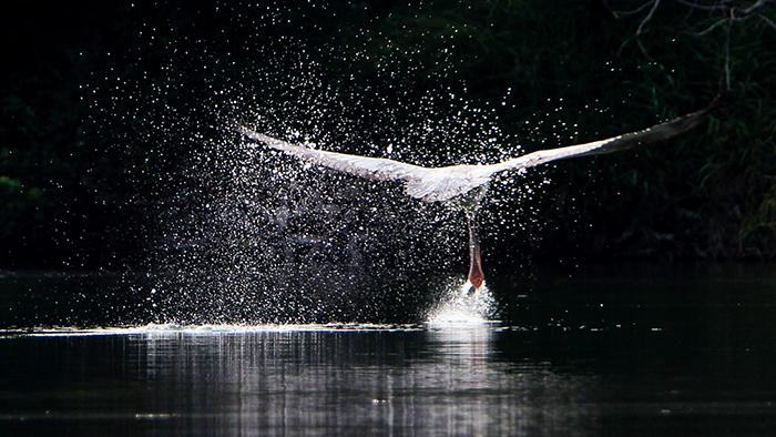 Bird Photography Workshop @ Ranganathitthu Bird Sanctuary