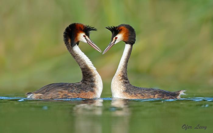 Top 14 Best and Professional Bird Photographers in the World. Amazing Bird Photos. Best and Professional Bird Photography Tips.