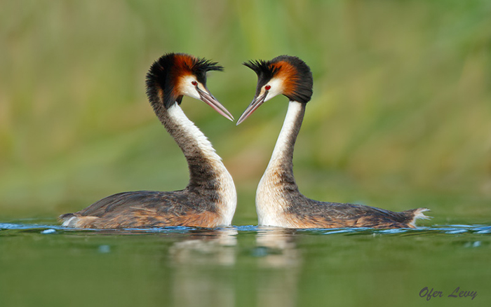 Top 14 Best and Professional Bird Photographers in the World. Amazing Bird Photos. Best and Professional Bird Photography Tips.
