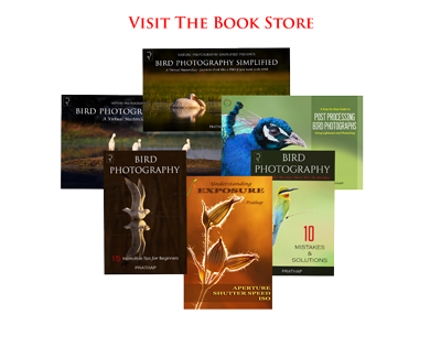 Best Bird Photography eBooks or Books. Best bird photography tips for beginners, amateur, and experienced bird photographers. Free Bird Photography eBooks.