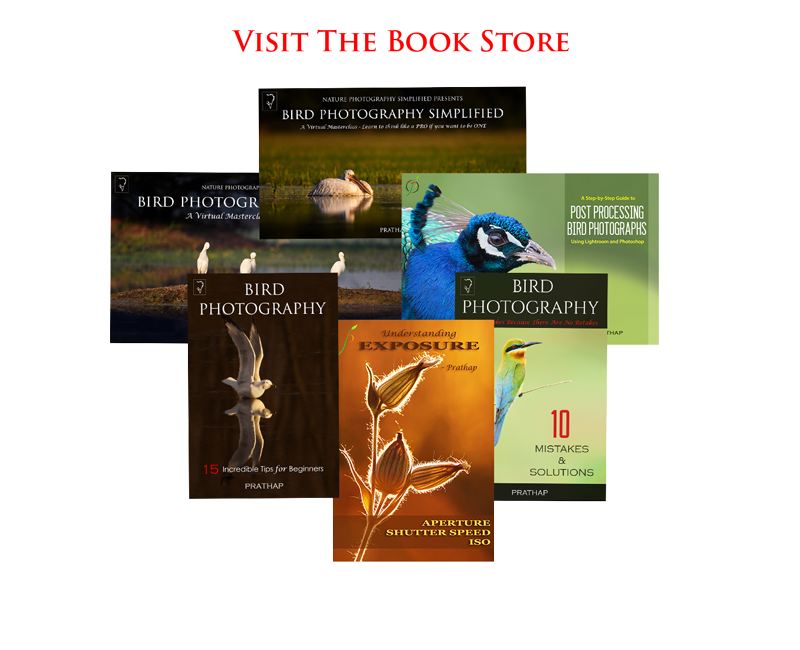Best Books on Bird Photography. Bird Photography eBooks. Free Bird Photography book. Post processing eBook. Best Nature and Wildlife Photography eBooks.
