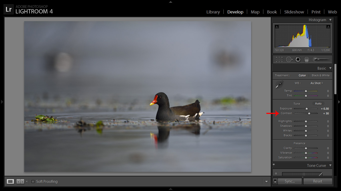 Best Bird Photography Post Processing Tips for Bird Photographers Using Adobe Lightroom. Birds, Wildlife, and Nature Photography by Prathap. Nature Photography Simplified.