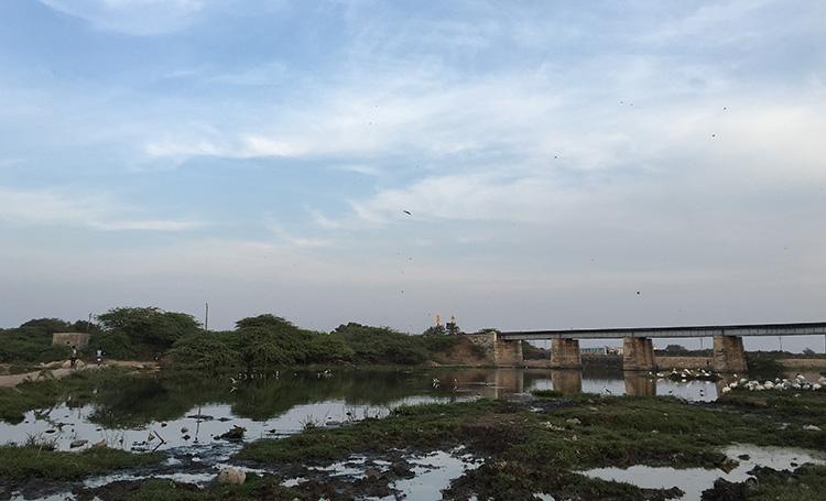 Birding at Jamnagar, Gujarat.