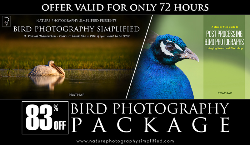 Most popular Bird photography ebooks or books. Professional Bird Photography and Post-Processing Tips and Techniques by Prathap.
