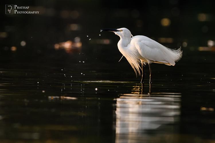 Best Bird Photography Tips and Techniques. Bird Photography in India. Ranganathittu Bird Sanctuary, Mysore, India.