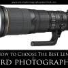 How to choose the best lens for bird photography