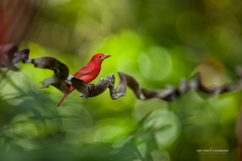 Interview with Award Winning Nature and Wildlife Photographer Greg Basco with Prathap from Nature Photography Simplified.